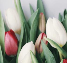 Ayurveda im Frühling