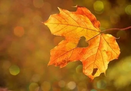 a fall leave with a heart cut out of it