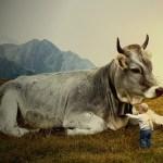 Yogische Ernährung, Yoga in Österreich, Milchprodukte