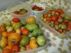 mixed garden tomatoes