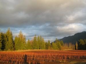 fall evening blueberry fields