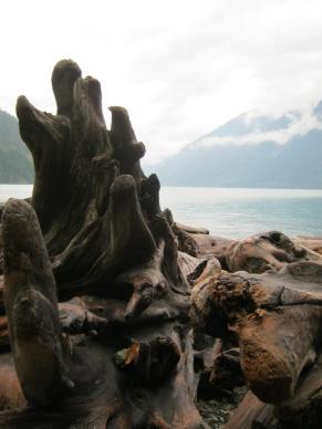 driftwood3