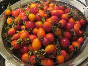 foraged rose hips