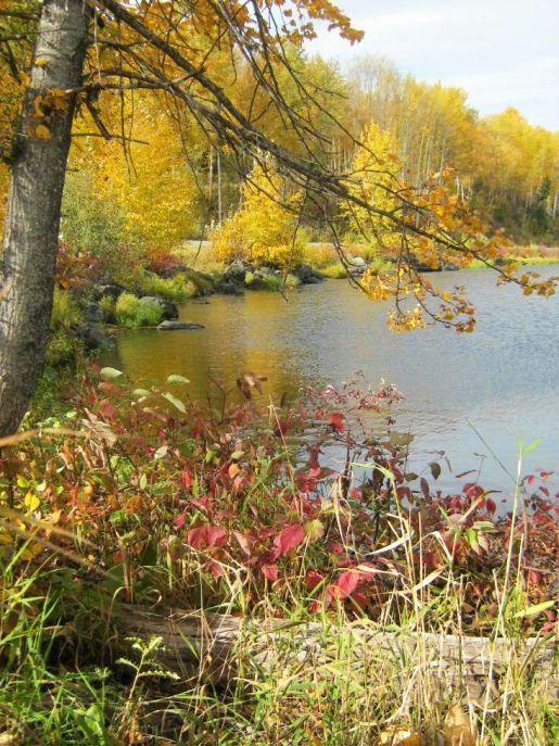 Eaglet Lake