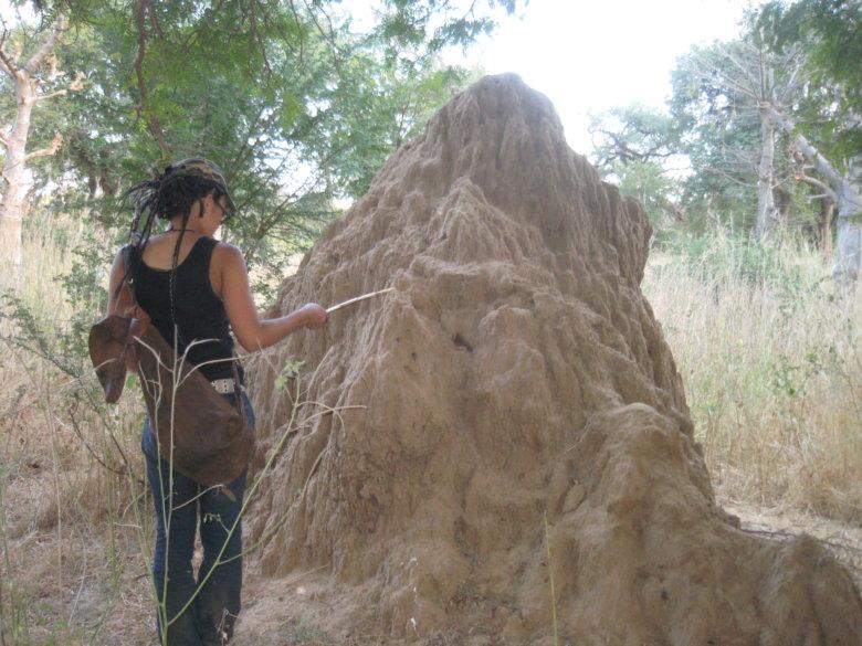 巨大な蟻塚を発見