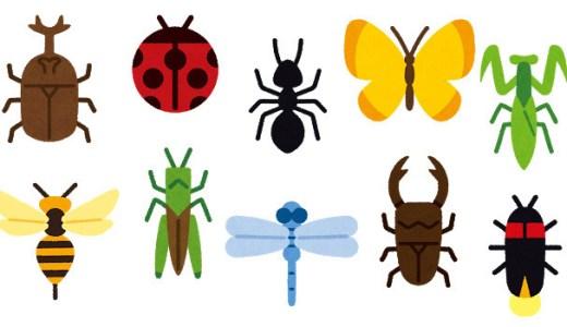 【虫と遭遇したら】アフリカ人の知恵とその対処法!
