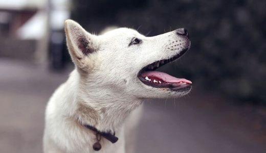 台湾では犬も猫も自由だ!動物愛護の観点から見る生き物との触れ合い方