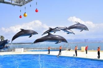 「福岡動植物園や海の中道マリンワールド」の画像検索結果