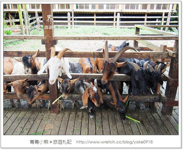 羊世界休閒農場