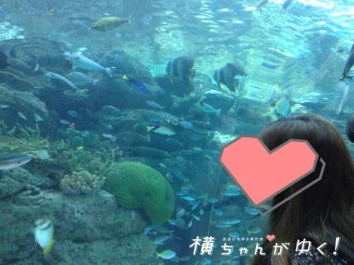 名古屋港水族館29