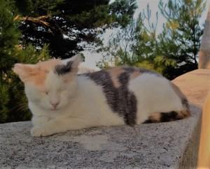 【column】 猫バンバン(=^・ω・^=)