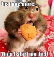 diet-hamster