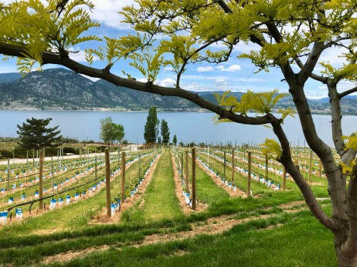 The best Okanagan wineries: your ultimate guide (written by a local)