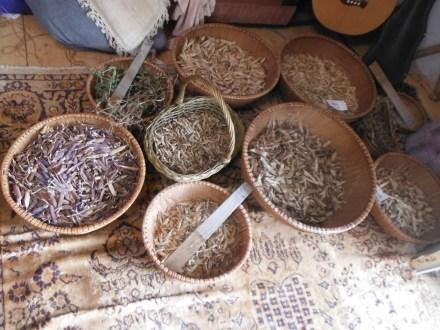 saving pea seeds
