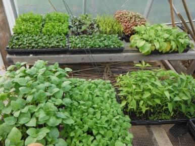 spring seedlings 1
