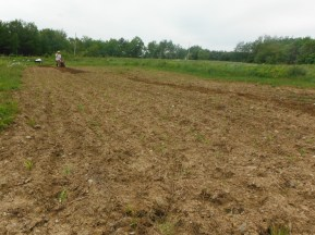 corn and tilling