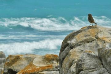 surf_bird