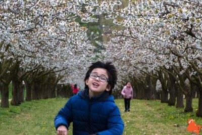 2019 04 06 - Les cerisiers de Jussy - YET89-16
