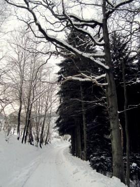 Walking to the village