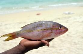 PlayaBlanca (4)
