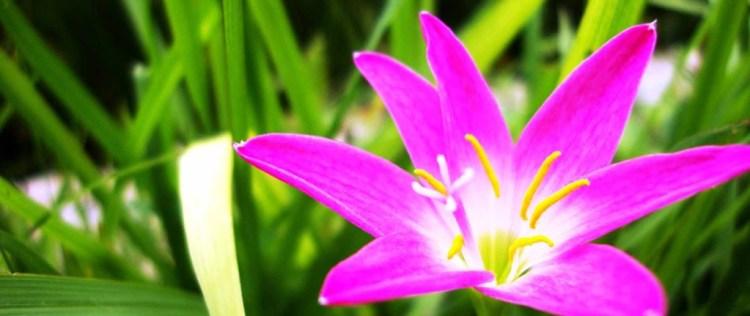 1900x800 pink flower