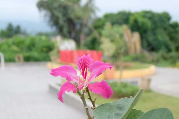 Foto bunga di Ngarai Maaram Bukittinggi
