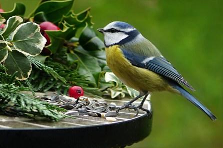 York Gardening's early Spring friend