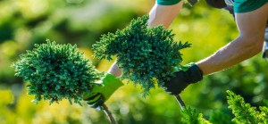 Get planting with York Gardening