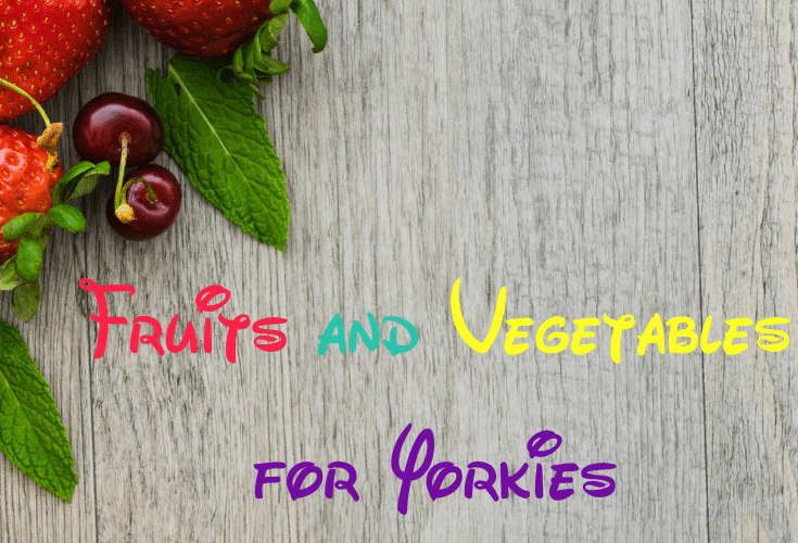 Fruits and Vegetables for Yorkies