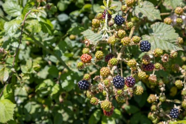 Dorset is home to some amazing fresh local produce - pic credit Alex Smith - Unsplash