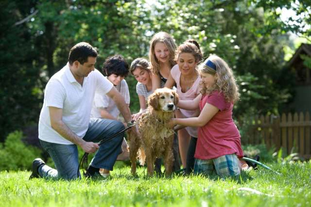 There is a lot to consider when planning to get a dog for your perfect family pet.