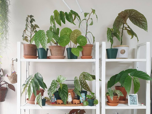 The ideal temperature is required for the best results and for the health of your indoor plants for your indoor garden.