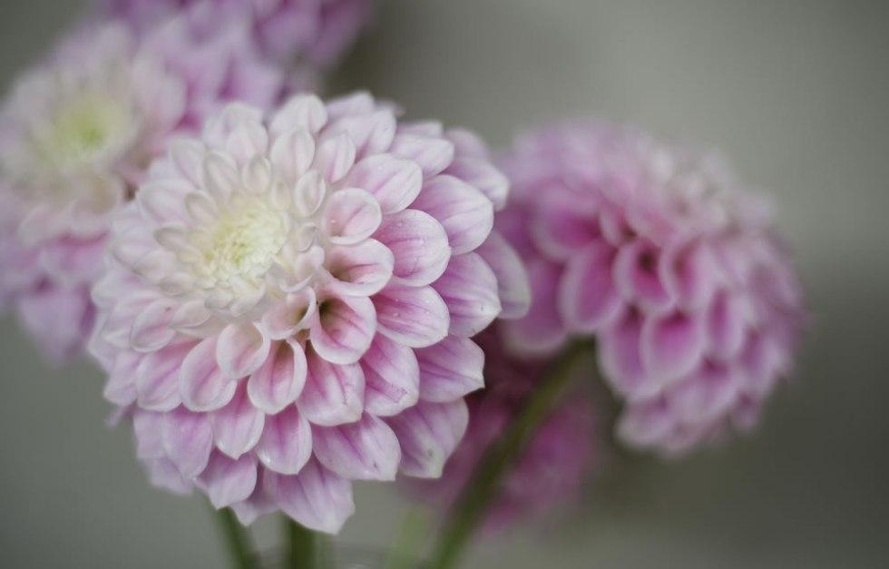 flowers in bloom skipton