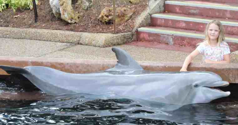Meeting the Dolphins at SeaWorld, Orlando, Florida