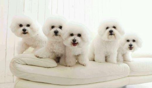 パナソニックCMで綾瀬はるかが見守る犬の種類は?犬種の名前と値段はいくら?