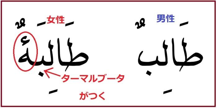 アラビア語「私は学生です」の女性のカタチ「ターリバ」の説明