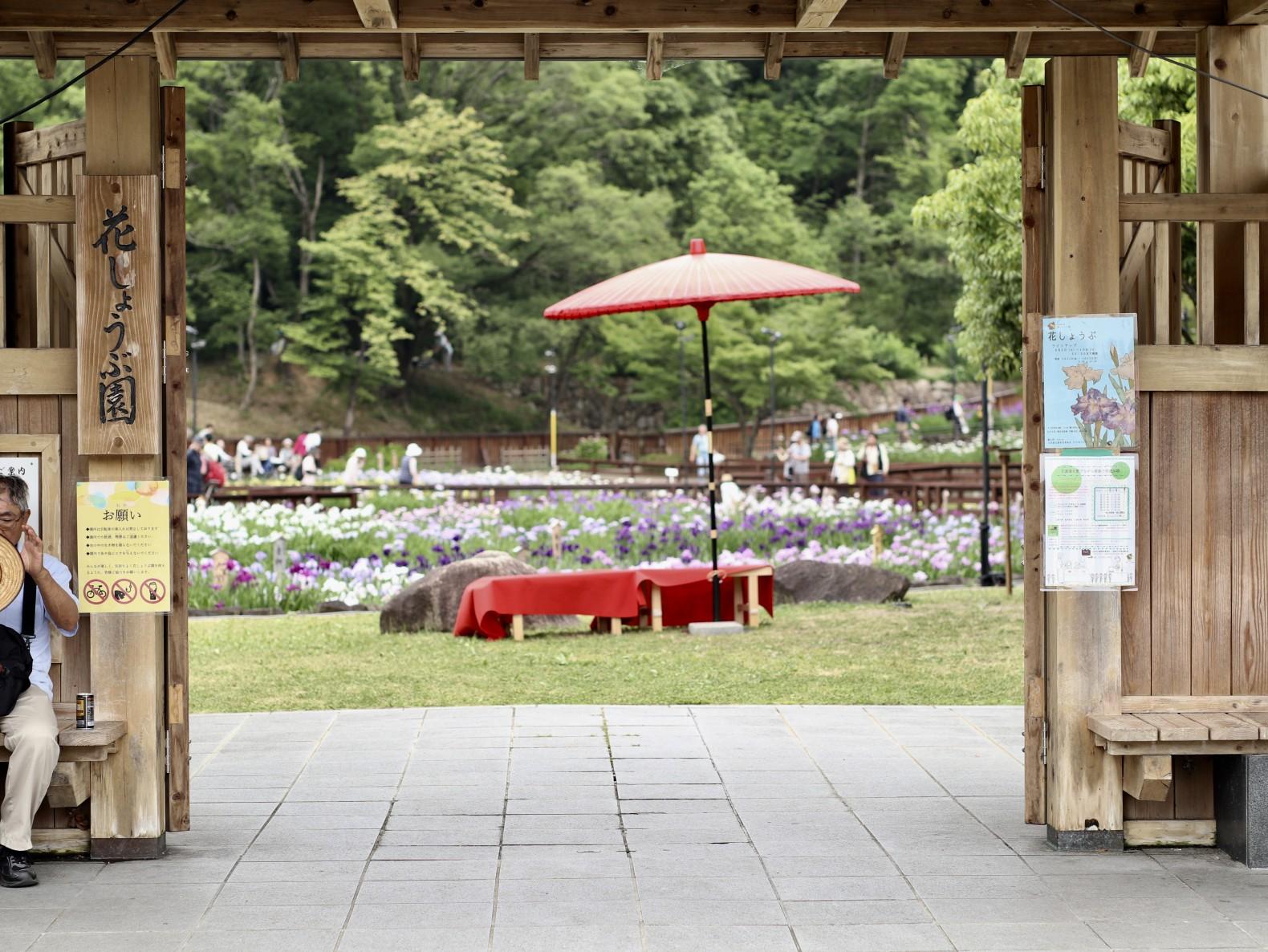 山田池公園花しょうぶ園