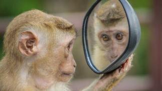 自分を見つめるお猿さん