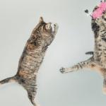 飛び跳ねる2匹の猫