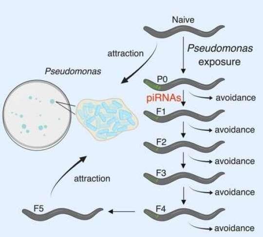 遺伝する忌避行動