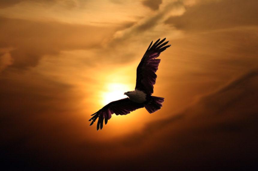 Resultado de imagem para aguia sabedoria
