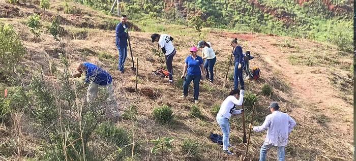 Plan Ave Fénix realizará primera siembra de 2019 en el Cerro de Cristo Rey