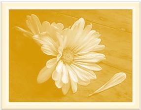 fading-petals