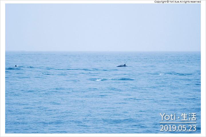 [花蓮漁港] 花蓮港休閒碼頭   一年四季都適合, 賞鯨魚海豚的起點登船處