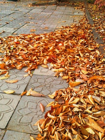 Daun-daun berguguran