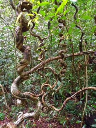 matang wildlife center malaysia kuching borneo
