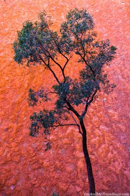australia-uluru-6233