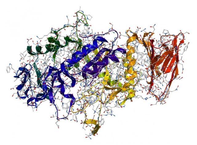 Numerous Enzymes