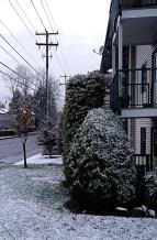 Snowy Yard Front (2014)
