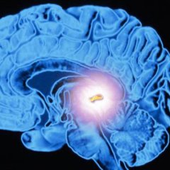 The Mysteries Behind The Pineal Gland And How It Can Change Your Life